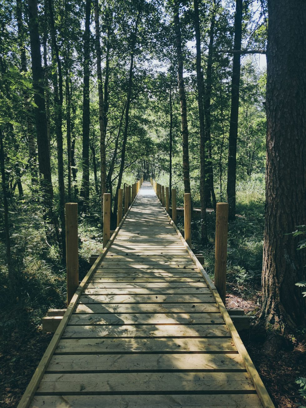 A wooden pathway in a forest. Opens in lightbox.